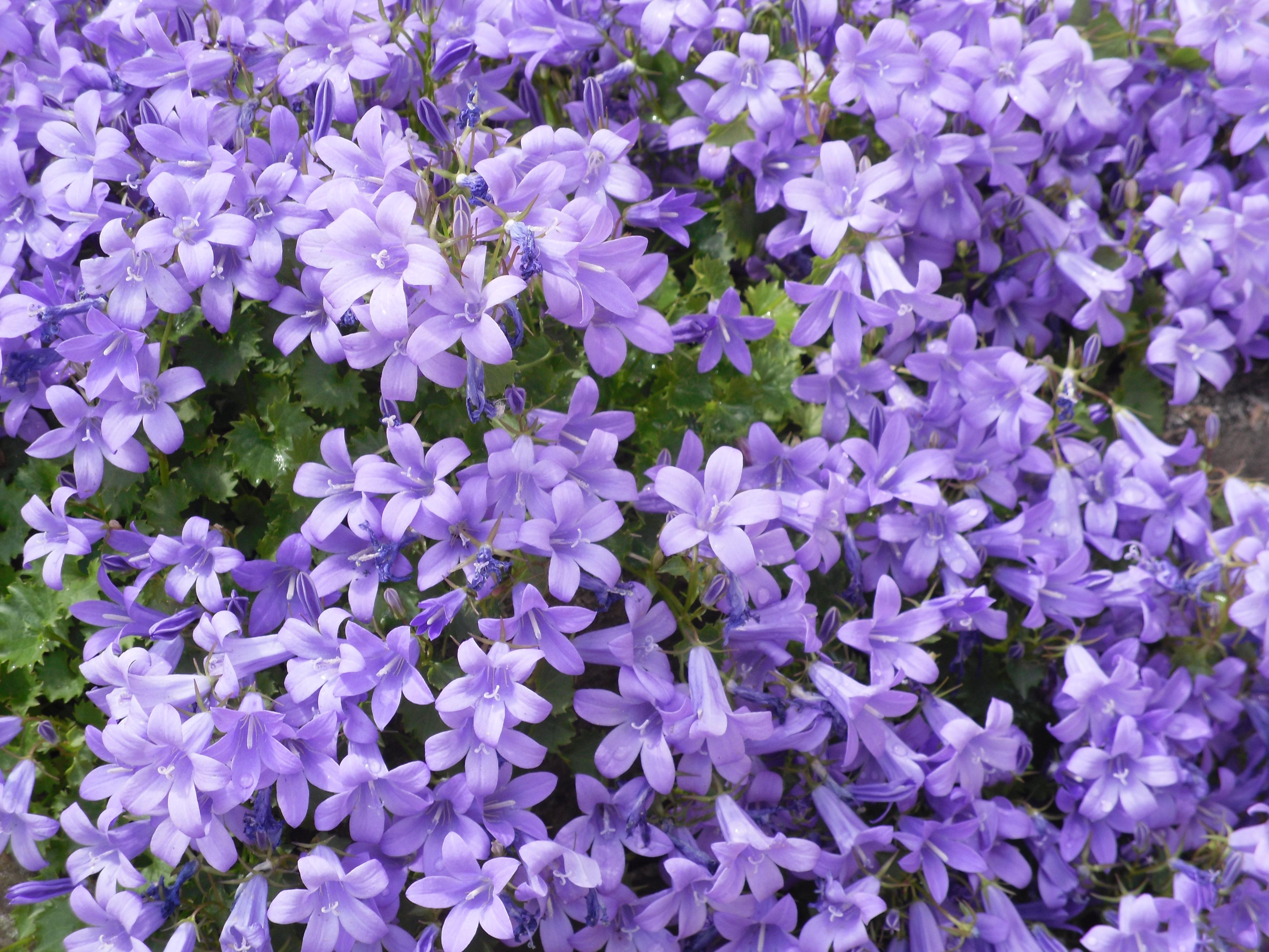 flowers zikkin.com