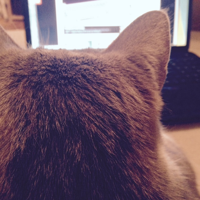 mycat-yesweblog
