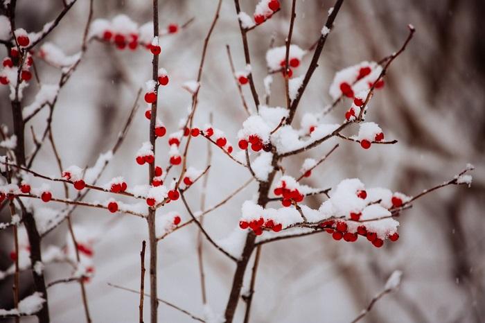 snow-snapswiresnaps