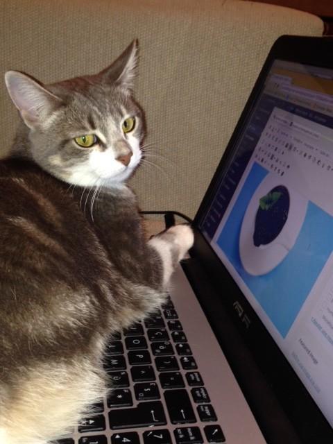 working-cat