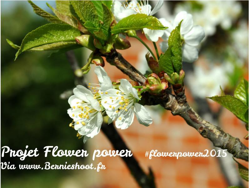 flowerpower2015-logo-bernieshoot