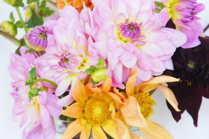 bouquet-dahlias