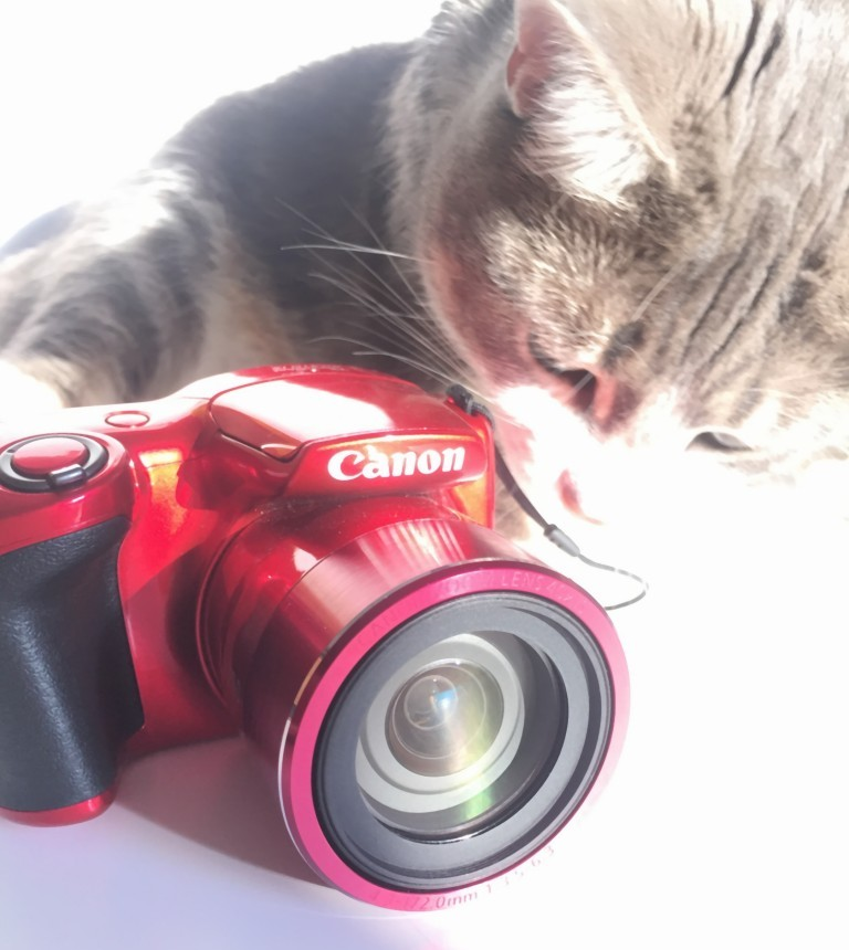 Cat photo caméra
