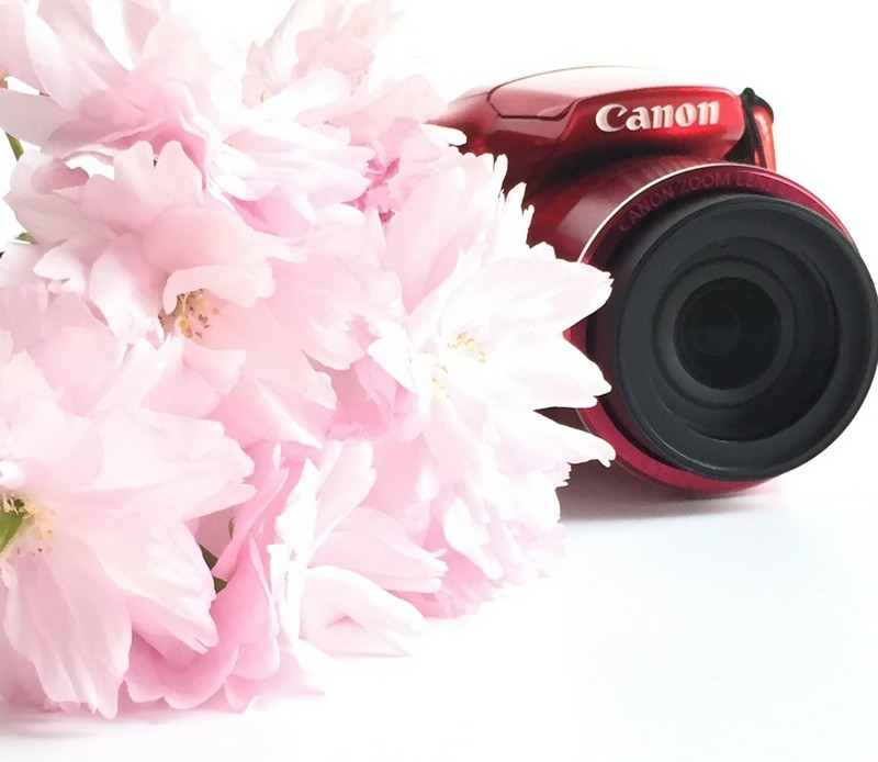 sakura-and-camera-yesweblog