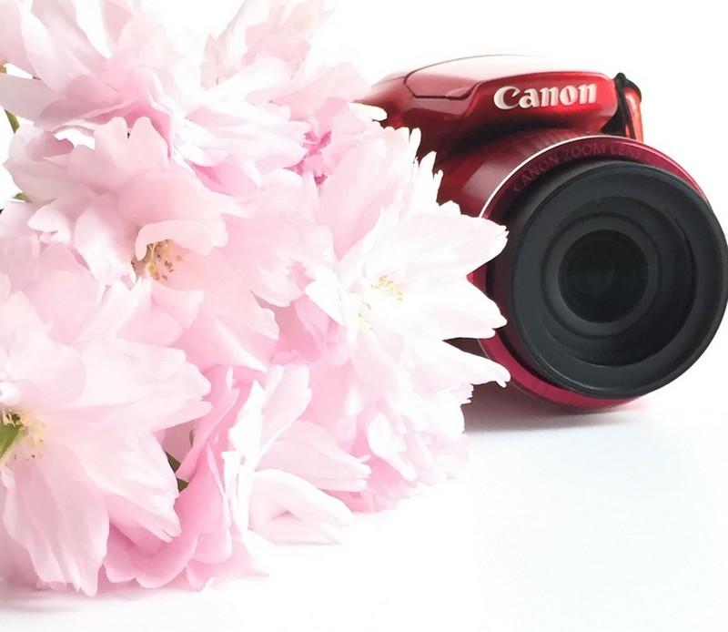 sakura-and-camera-yesweblog