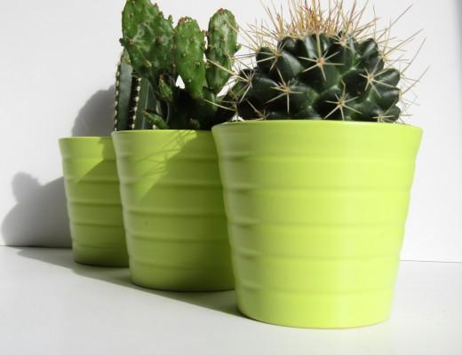 cactus-3-520x400