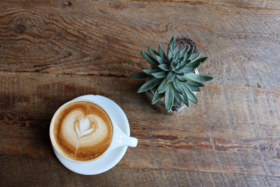 cofee-succulent