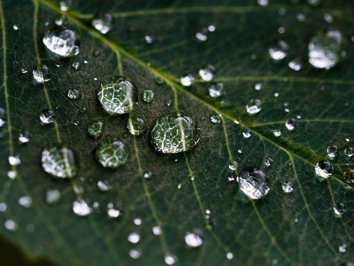 green-rainy-leef