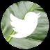 twitter-icon-72x72