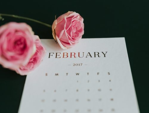february-new-pink-flowers